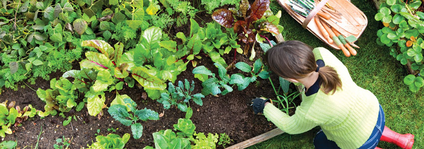 pamant pentru legume